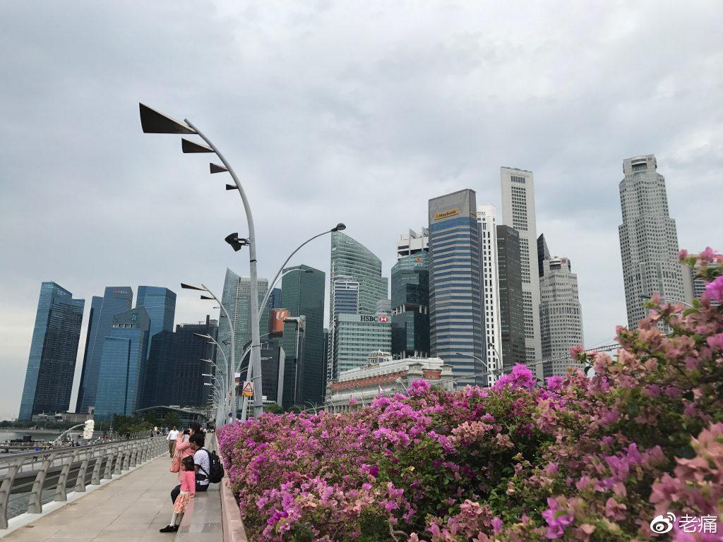 不愧是花园城市,从任何角度看向陆地,都可以看到绿植、鲜花。